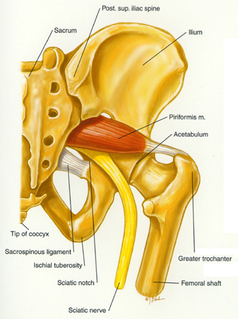 tight hip flexor tendon